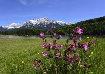 Lautersee mit Blumenwiese